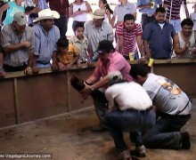 08-1638-cockfight-battle-600x4501